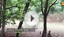 Luxury Wildlife Tour by Indo Asia Tours