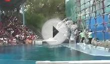 Singapor And Malaysia tour Dolphin Water Show